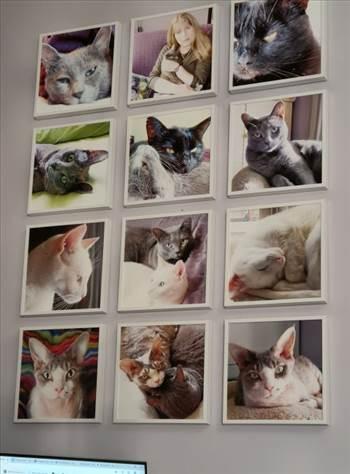 cat wall 01 - Copy.jpg by pjaye2000