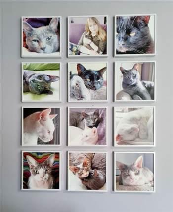 cat wall 02 - Copy.jpg by pjaye2000