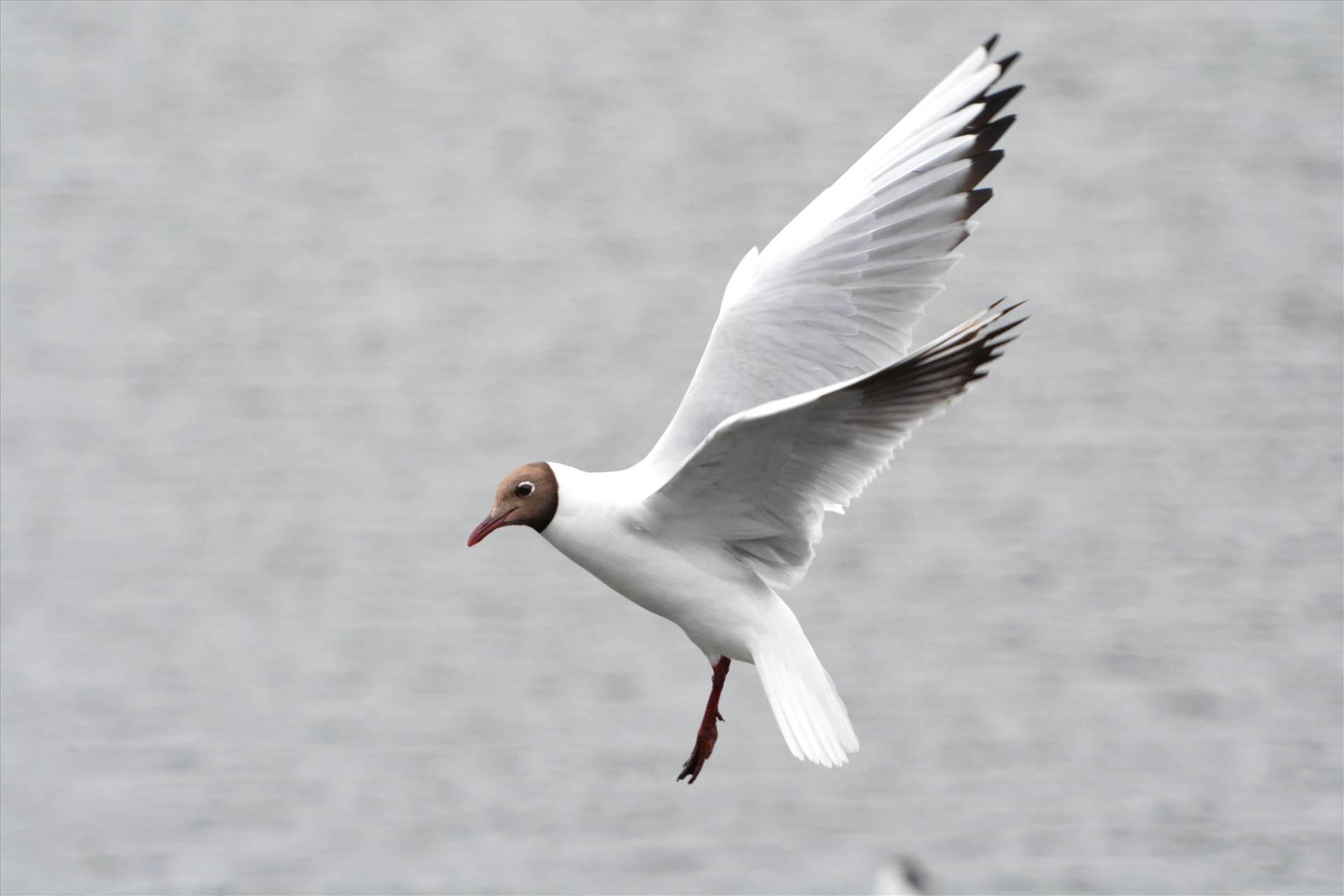 birds in flight3.jpg  by 10153385026797053