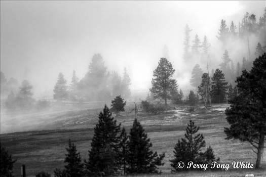 Foggy morning YSNP 06 2015 II-1.jpg by WPC-162
