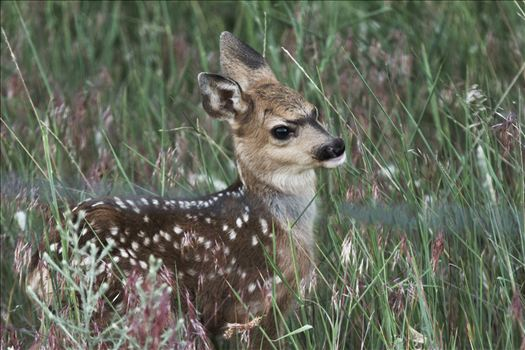 Newborn Fawn by Bear Conceptions Photography