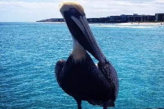 pelicandrones.com.jpg by Pelicandrones