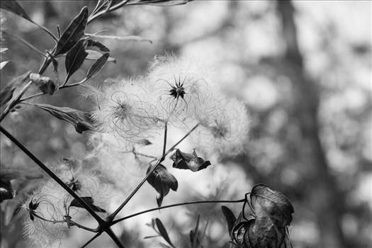 whispy by Nikki Harvey Photography