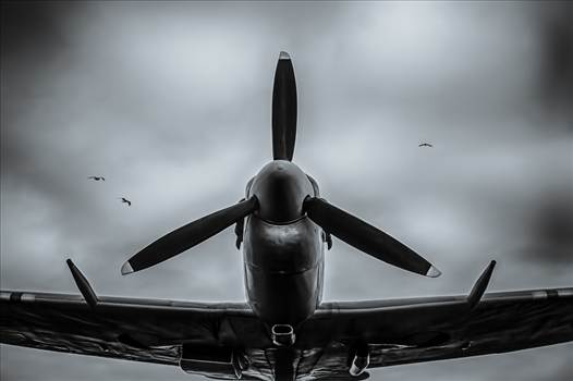 Warbirds.jpg by Tim Clay