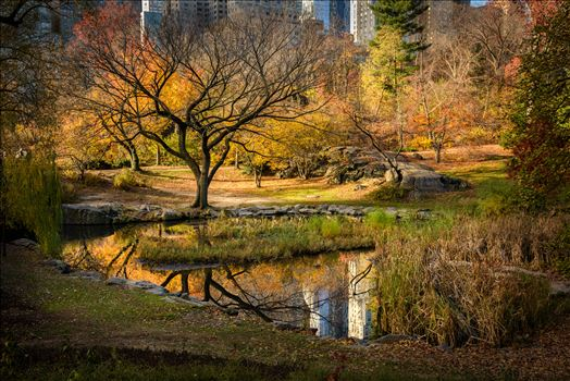 Central Park Autumn Reflections by Dawn Jefferson