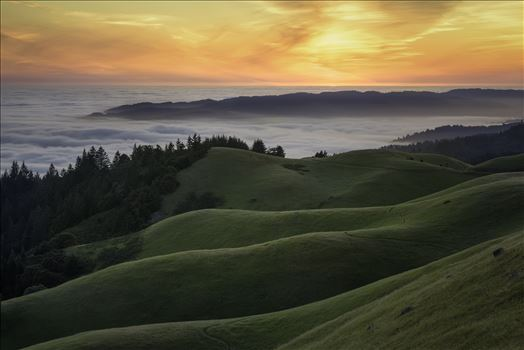 Above the Fog by Dawn Jefferson