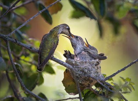 The Feeding by Dawn Jefferson