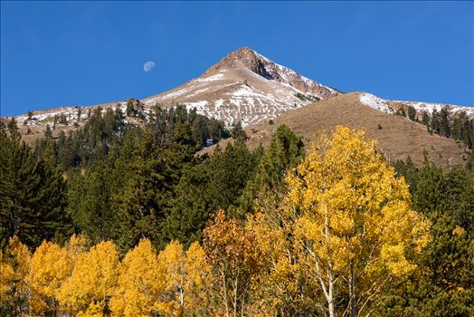 Fall Moon - Eastern Sierra fall foliage and the moon.