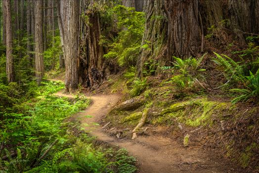Redwood National Park by Dawn Jefferson