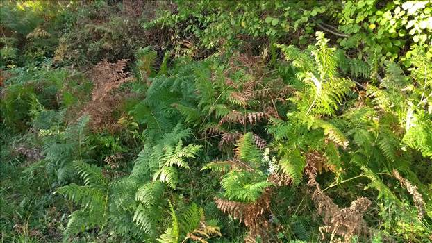 ferns.jpg by bhouse