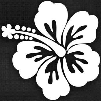 Hibiscus.jpg -