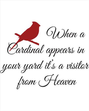 cardinal_design_2_2.jpg -