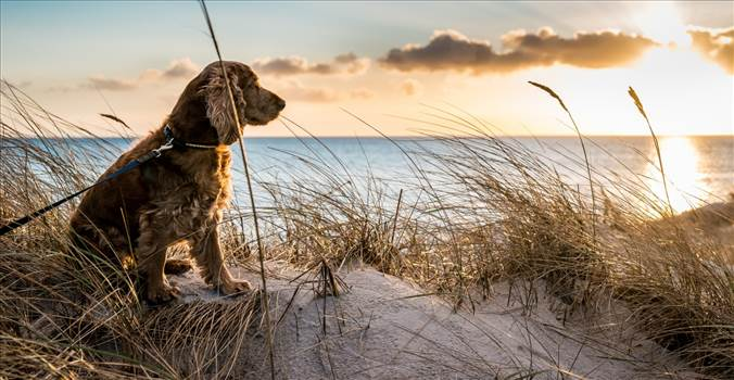dog-on-beach.jpg by Myrtlebeachpetfriendlrentals