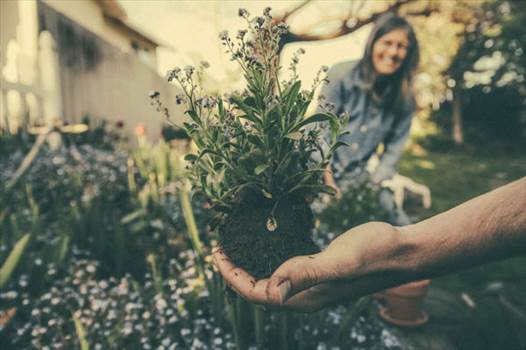 03-Gardening Services Auckland.jpg by propertyassistant