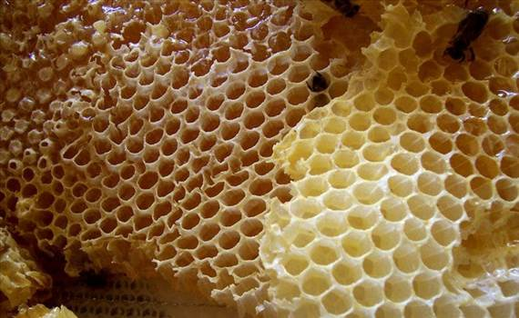 Trypophobia is a type of psychological condition, which causes panic or disgust when looking at a cluster of holes. Visit More- https://www.easyworknet.com/health/trypophobia-test/