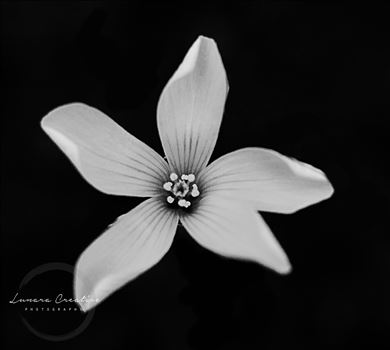 Lonely Flower by Lunara Creative Photography