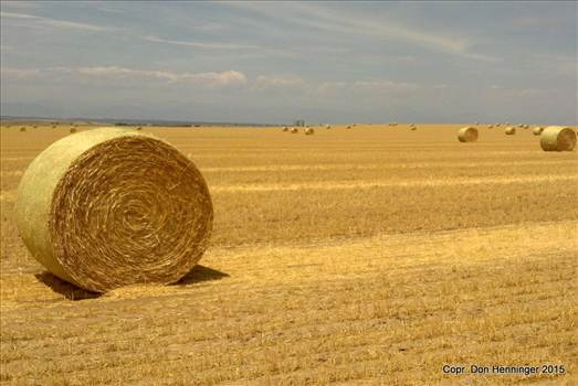 Former Amber Waves of Grain by WPC-360