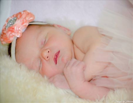 New Born Photography -