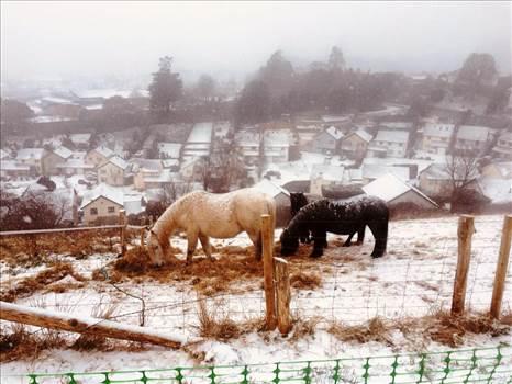 horses.jpg by DIAlexDrake