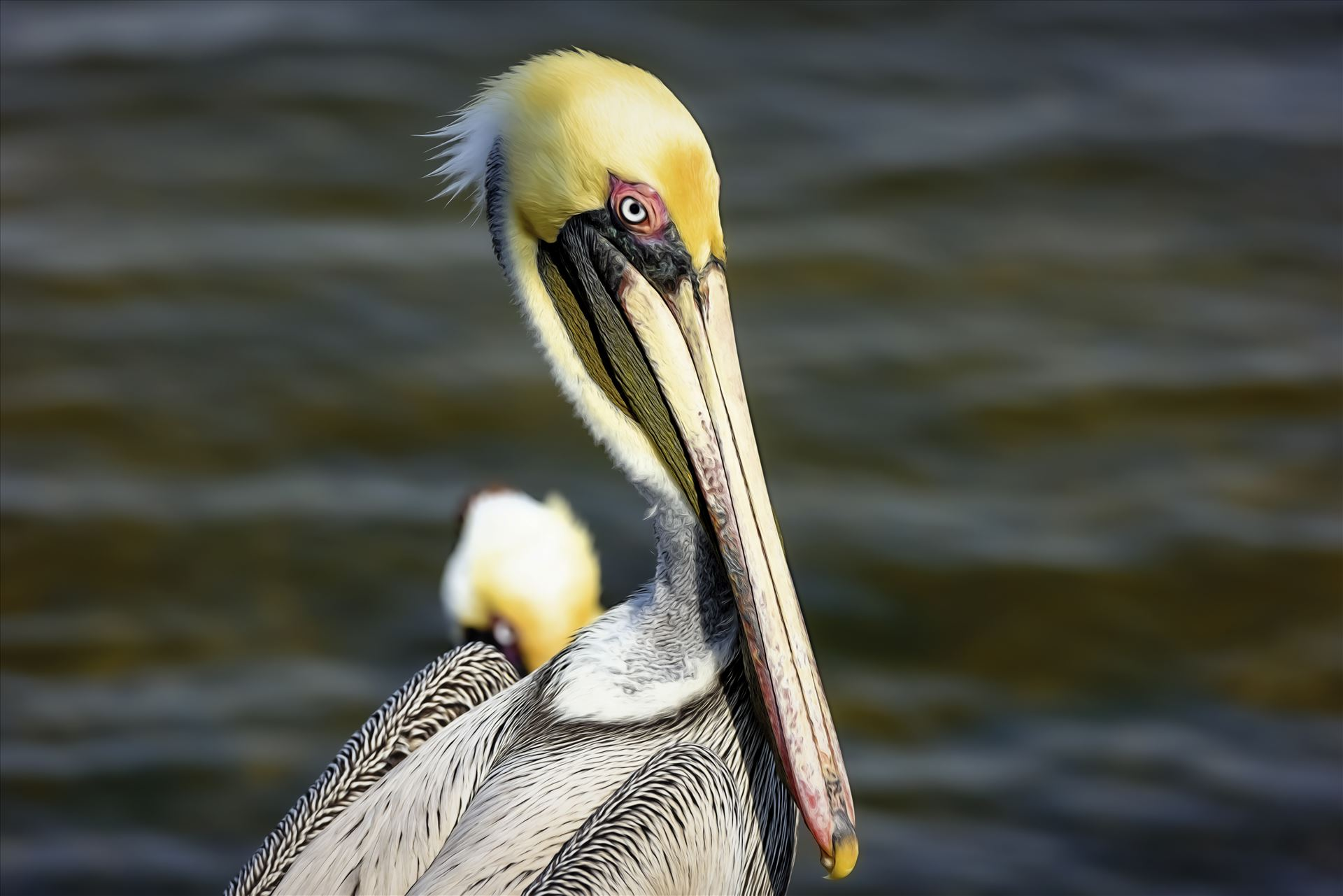 brown pelican portrait st. andrews state park 8108271.jpg  by Terry Kelly Photography
