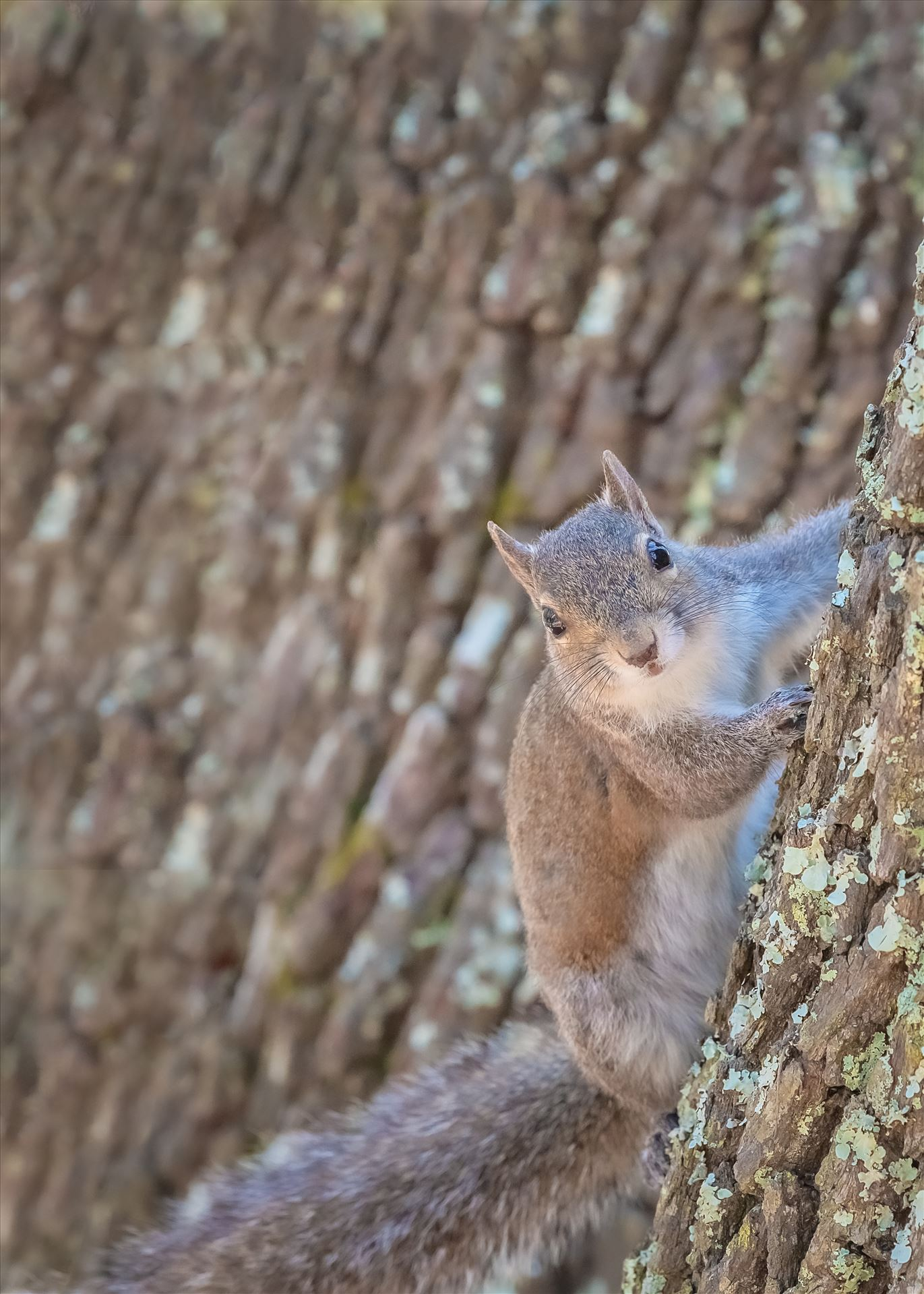 Squirrel squirrel on oak tree by Terry Kelly Photography
