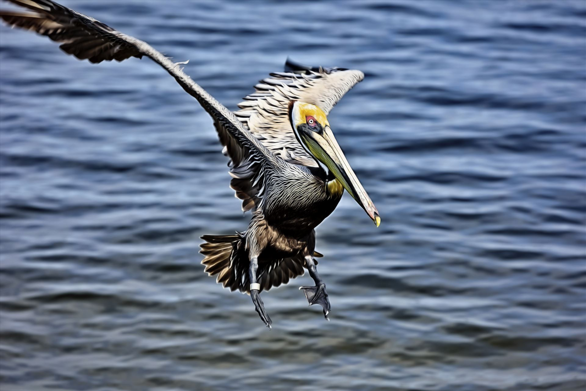 brown pelican landing st. andrews state park 8108265.jpg  by Terry Kelly Photography
