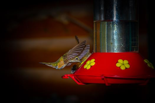 hummingbird at feeder 8500634 as ss sf.jpg by Terry Kelly Photography