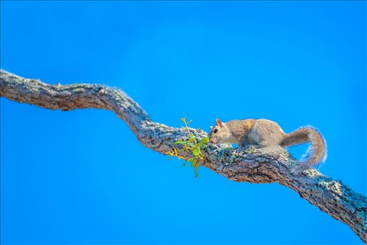 Squirrel by Terry Kelly Photography