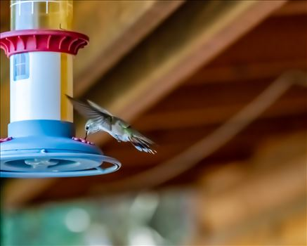 hummingbird at feeder ss as 8500536.jpg by Terry Kelly Photography