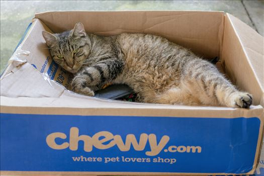 cat in a box 8500122.jpg -