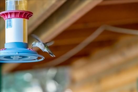 hummingbird at feeder ss as.jpg by Terry Kelly Photography
