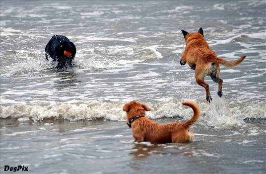 3 dogs.jpg by WPC-10503