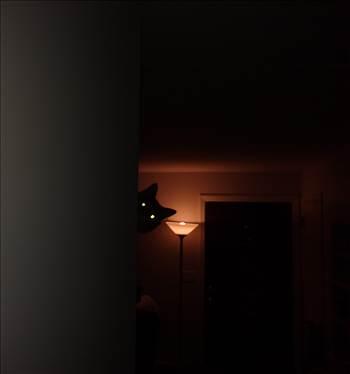 Spooky cat.jpg -