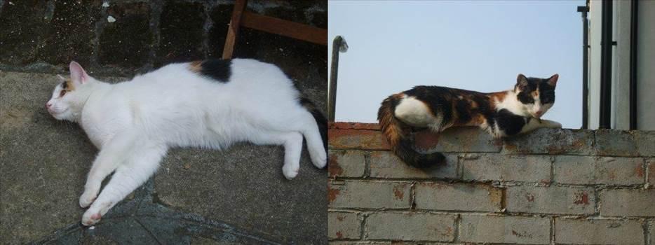 My kitties.jpg -