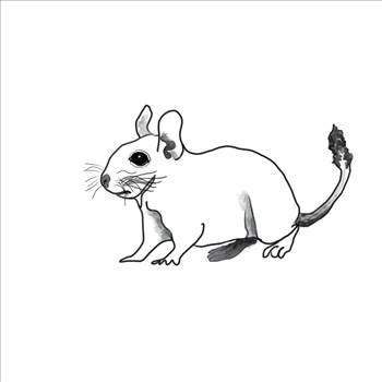 Alert Degu Line drawing.png by Bouncy