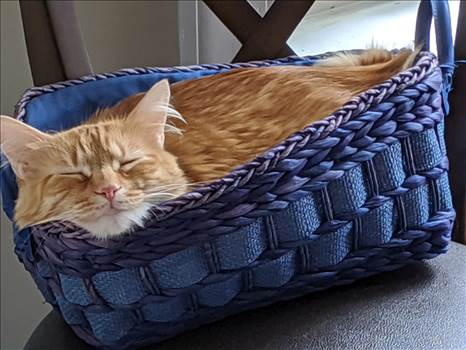 Maggie blue basket.jpg by Bouncy