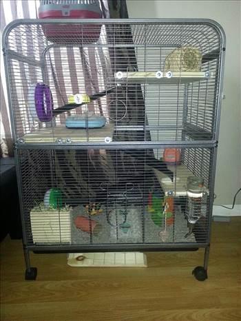 Degu Cage.jpg -