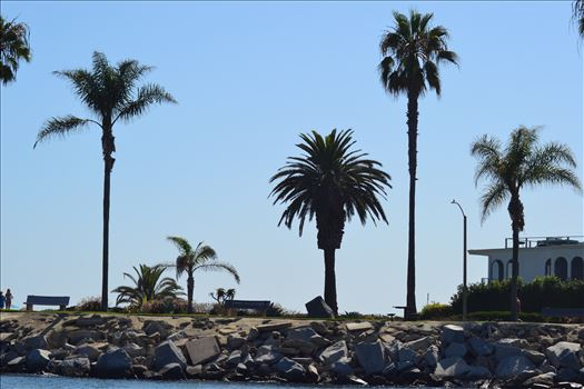 Newport Palms.JPG by 405 Exposure