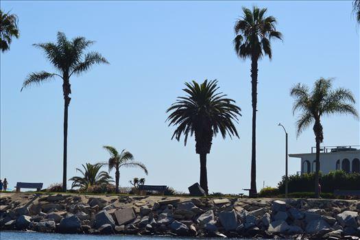 Newport Palms.JPG by 405 Exposure