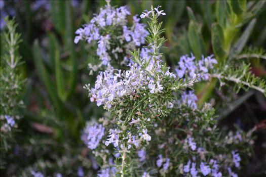 Coastal Flowers 1.JPG by 405 Exposure