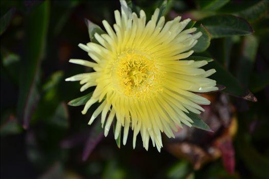 Coastal Flowers 3.JPG by 405 Exposure