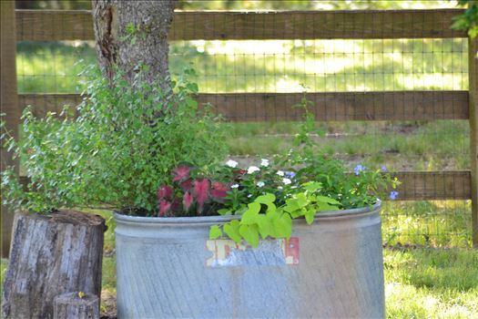 Lonesome Dove Planter 2.JPG by 405 Exposure