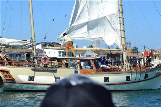Newport Harbor.JPG by 405 Exposure
