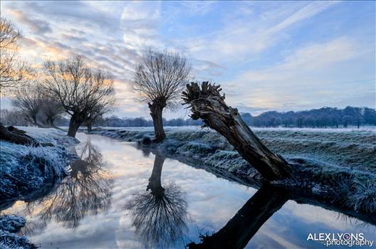 Richmond-Park-reflection.jpg by WPC-281