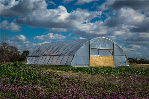 Greenhouse by Unbound Photography