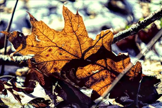 2016-01-13_WinterLeaf_StirlingR_0002-2.jpg by 1056027744407412