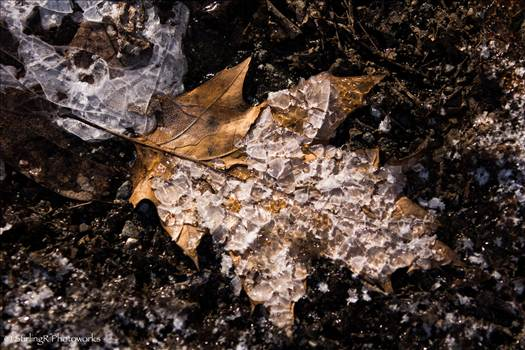 2016-01-13_WinterLeaf_StirlingR_0001.jpg by 1056027744407412