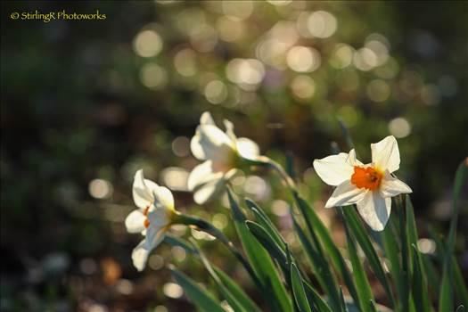 2015-10-25_Flowers_StirlingR_0008.jpg by 1056027744407412