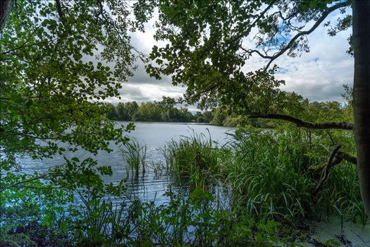 'Bolam Lake through the Trees' by Graham Dobson Photography
