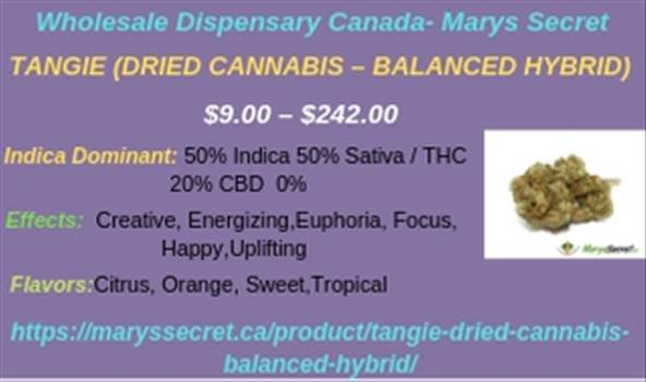 Wholesale Dispensary Canada- Marys Secret.jpg by maryssecret